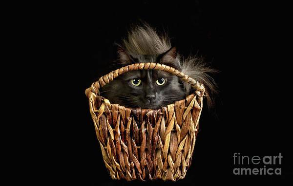 Photograph - Boyfriend In A Basket by Susan Warren
