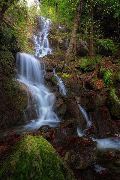 Wall Art - Photograph - Brace Mountain Trail Falls by Bill Wakeley