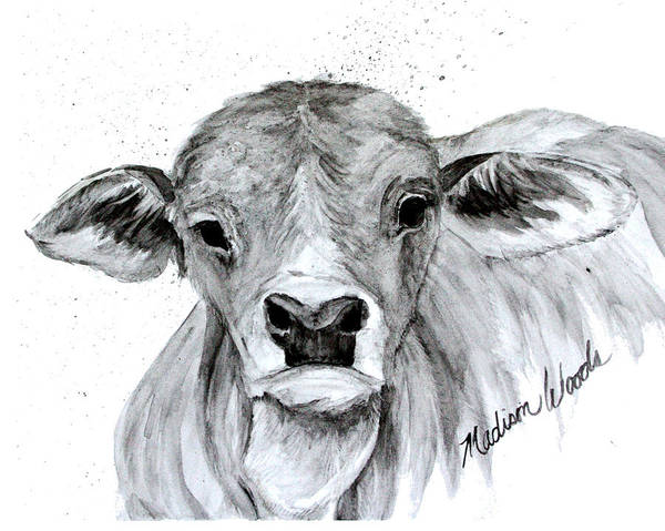 Wall Art - Painting - Brahman Baby by Madison Woods