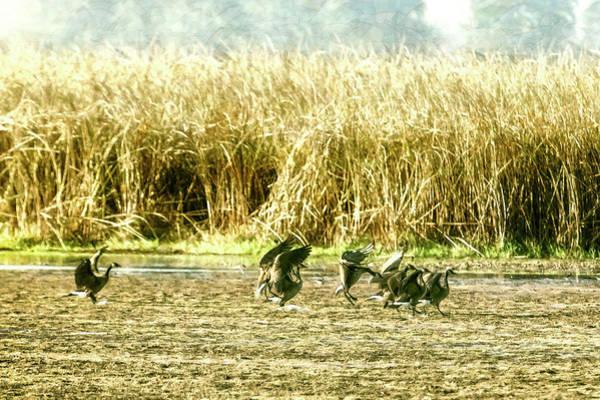 Photograph - Braking To Land by Belinda Greb