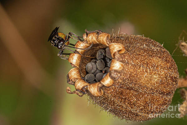 Photograph - Bramble Saw Fly by Brian Roscorla