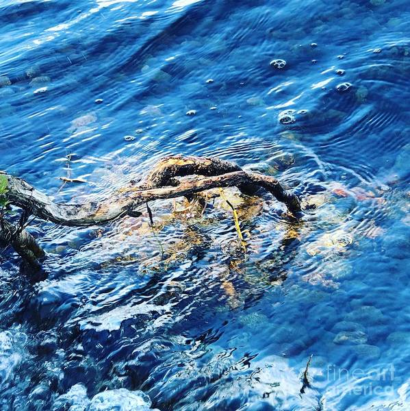 Photograph - Branch In Blue Water by Suzanne Lorenz