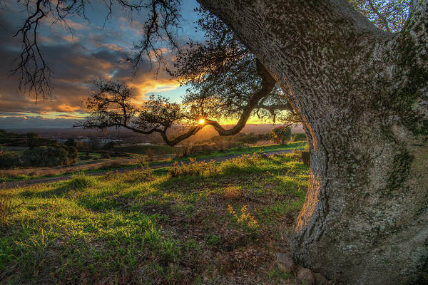 Sonoma Photograph - Branch Of Light by Rmb Images / Photography By Robert Bowman