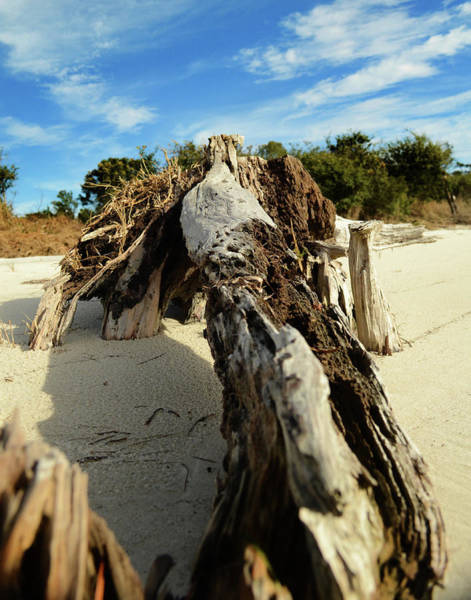 Photograph - Branch On Beach by Maggy Marsh