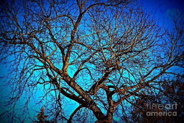 Photograph - Branch Out by Frank J Casella