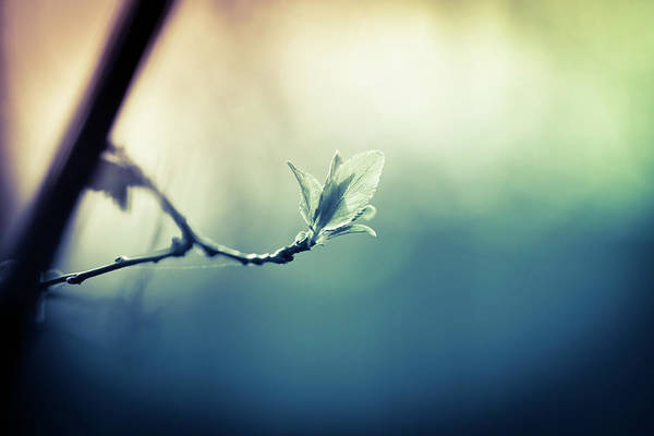 Sunlight Photograph - Branch With New Leaves by Jeja