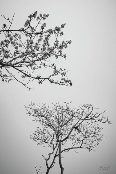Photograph - Branching Out II Bw by David Gordon