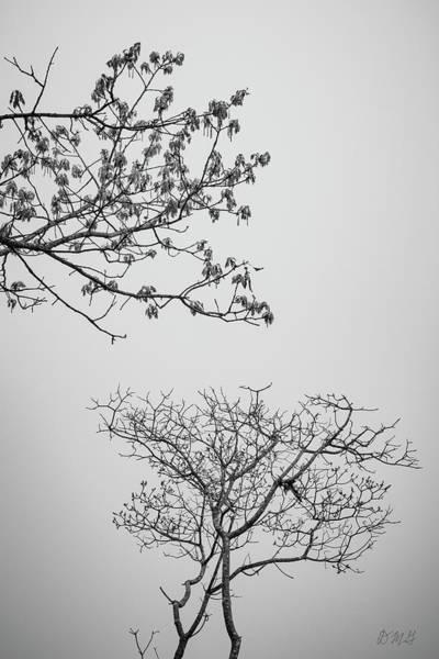 Photograph - Branching Out II Bw by David Gordon