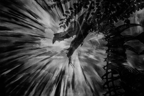 Photograph - Breath Of The Dragon by Jim Cook