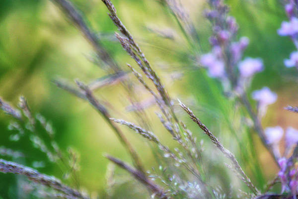 Wall Art - Photograph - Breezy Morning by Bonnie Bruno