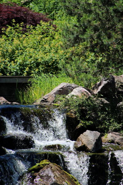 Photograph - Bridge And Waterfalls At Chicago Botanical Gardens by Colleen Cornelius