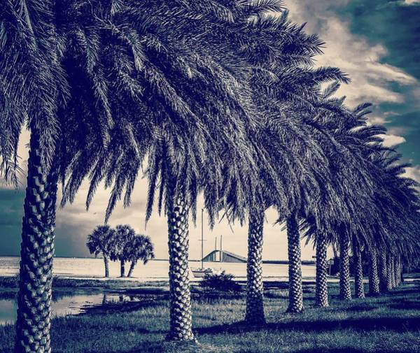 Port Of Tampa Wall Art - Photograph - Bridge Behind Palms by Lynne Pedlar