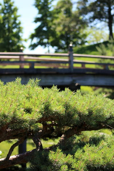 Photograph - Bridge In Japanese Garden by Colleen Cornelius