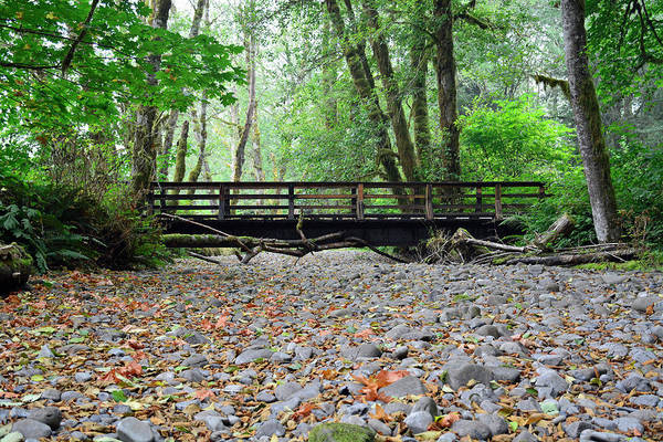 Photograph - Bridge In Olympic National Park's Maple Glade Rain Forest by Bruce Gourley