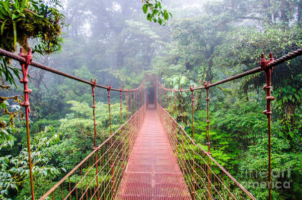 Wall Art - Photograph - Bridge In Rainforest - Costa Rica - by Simon Dannhauer