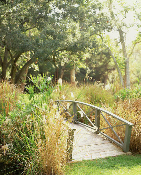 Ornamental Grass Photograph - Bridge Surrounded By Miscanthus And by Lisa Romerein