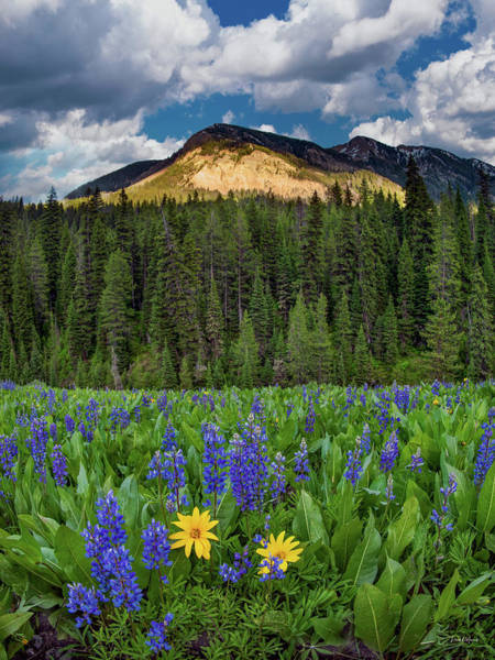 Photograph - Bridger Teton National Forest by Leland D Howard
