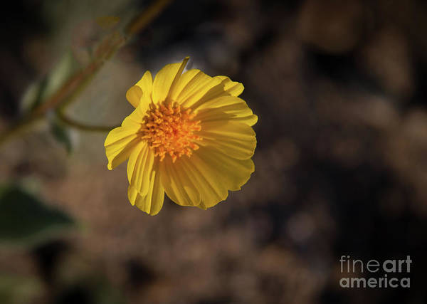 Juxtaposition Photograph - Bright And Beautiful by Robert Bales