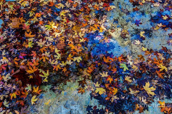 Wall Art - Photograph - Bright Beautiful Fall Foliage Floating by Richard A Mcmillin