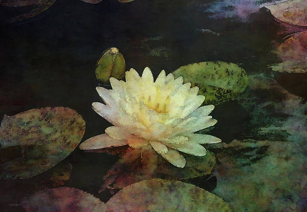 Photograph - Bright Blossom And Dark Water 4161 Idp_2 by Steven Ward