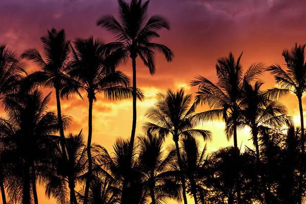 Wall Art - Photograph - Bright, Colourful Sky With Palm Trees by Jenna Szerlag