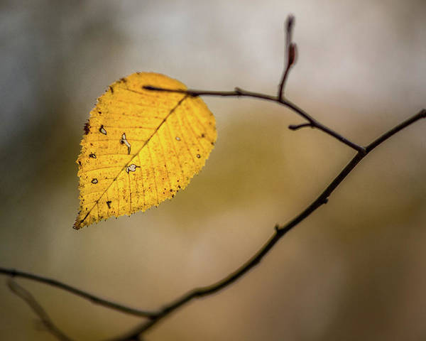 Photograph - Bright Fall Leaf 9 by Michael Arend