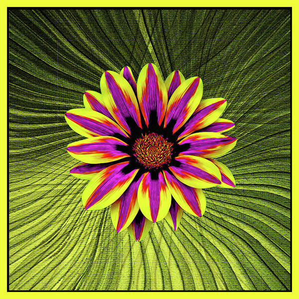Palm Frond Digital Art - Bright Gazania With Palm Fronds by Claudia O'Brien