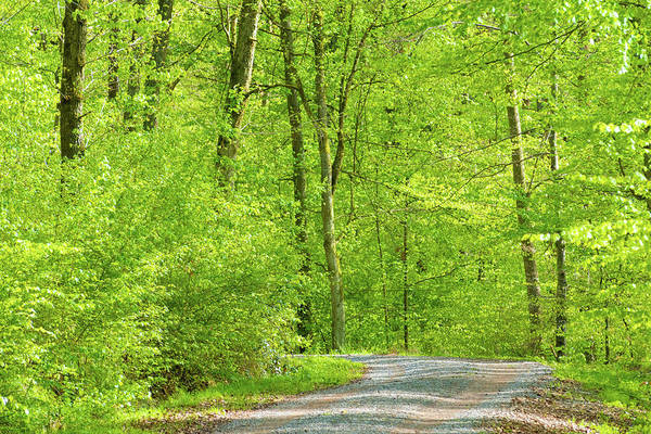 Wall Art - Photograph - Bright Green Trees In German Forest by Matthias Hauser