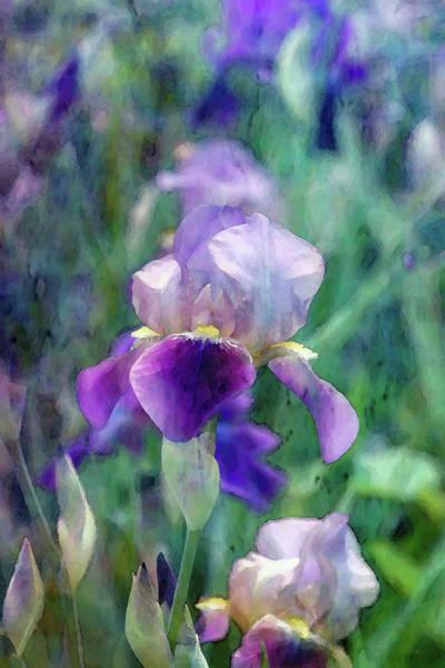 Photograph - Bright Iris 6816 Idp_2 by Steven Ward