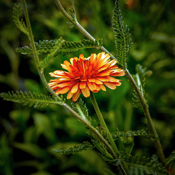 Photograph - Bright Orange #i9 by Leif Sohlman