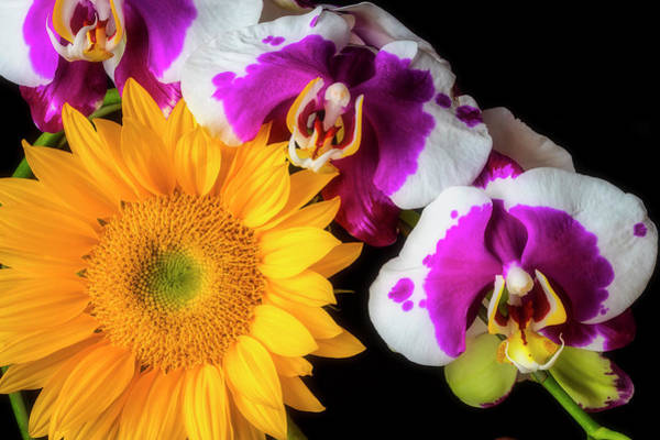 Wall Art - Photograph - Bright Sunflower And Orchids by Garry Gay
