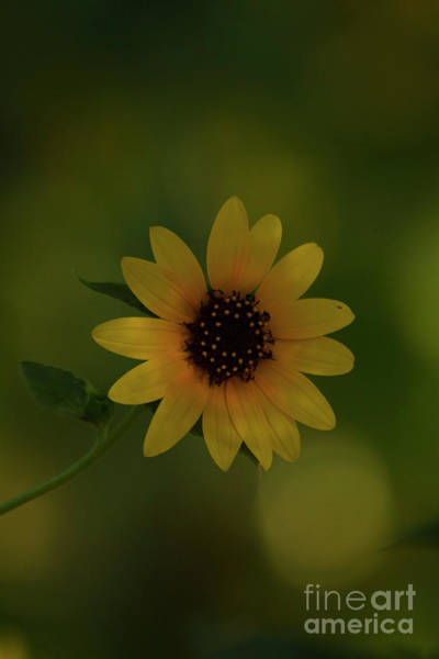 Wall Art - Photograph - Bright Sunflower Bloom by Ruth Jolly