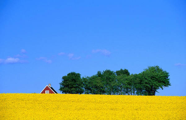 Skane Photograph - Bright Yellow Rapefields And Red Roofed by Anders Blomqvist
