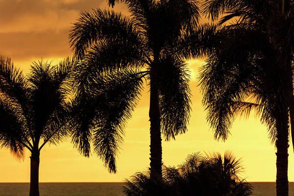 Wall Art - Photograph - Bright Yellow Sky With Palm Tree by Jenna Szerlag