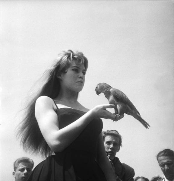 Cannes Photograph - Brigitte Bardot In Cannes In 1956 by Keystone-france