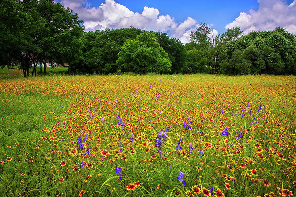 Photograph - Brilliant Wildflower Days In The Hill Country by Lynn Bauer