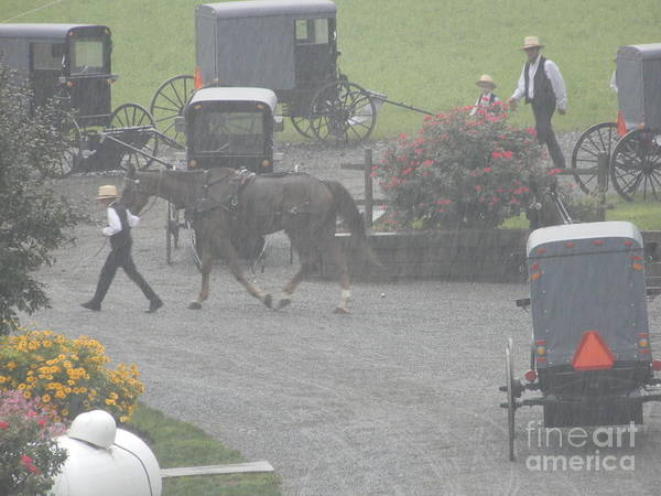 Photograph - Bringing A Horse To A Buggy by Christine Clark