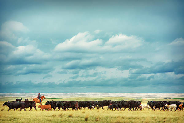 Photograph - Bringing In The Herd by Todd Klassy