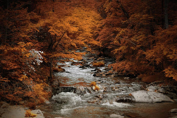 Photograph - Brisk Autumn Stream by Jai Johnson