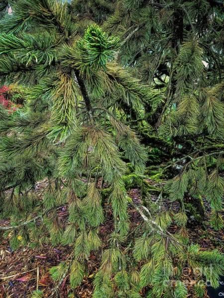 Photograph - Bristlecone Pine by Jon Burch Photography