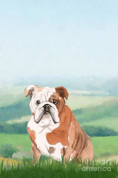 Pedigree Painting - British Bulldog by John Edwards