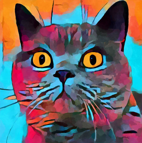 Wall Art - Painting - British Shorthair by Chris Butler