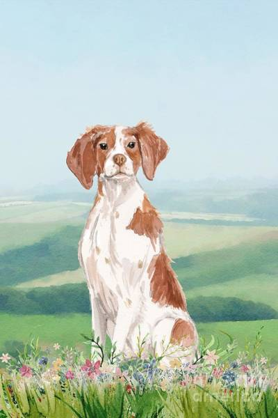 Pedigree Painting - Brittany Spaniel by John Edwards