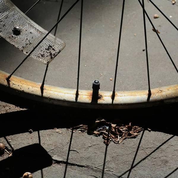 Break Up Photograph - Broken-down Bicycle Wheel by Linus Gelber / Alert The Medium