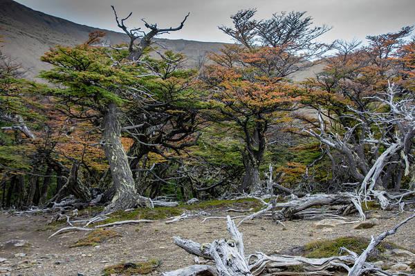 Photograph - Broken Forest by Mark Hunter