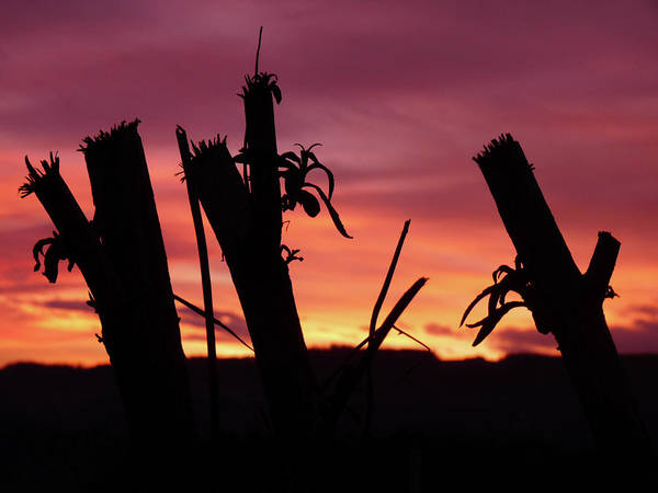 Photograph - Broken Trees - Sunset Silhouettes by Jonny Jelinek