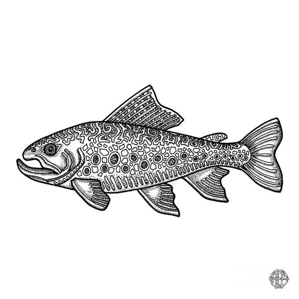 Drawing - Brook Trout by Amy E Fraser