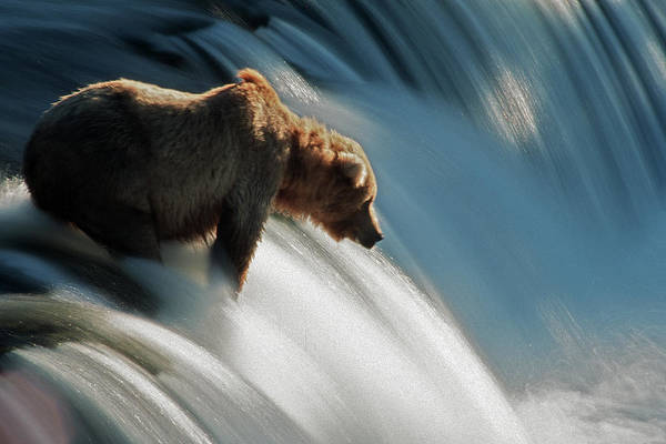 Poetry Photograph - Brown Bear At Brooks Falls by Mark Newman