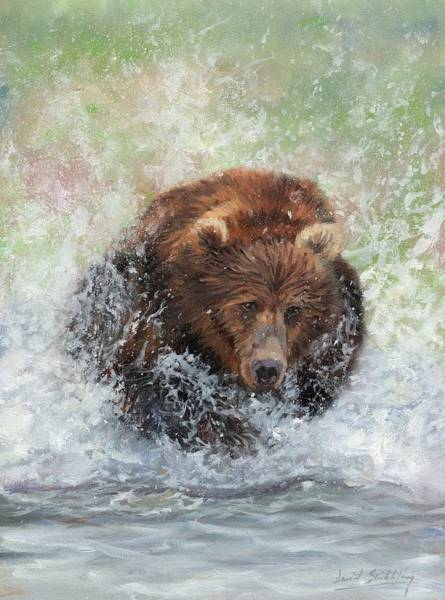 Painting - Brown Bear Charging Through Water by David Stribbling