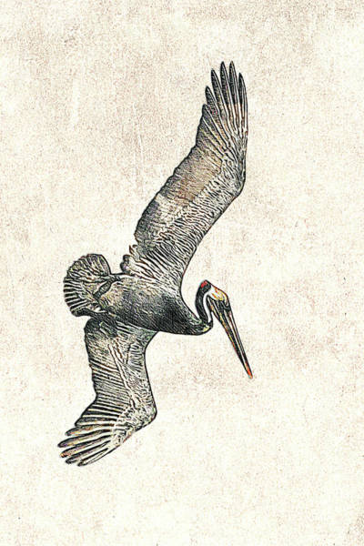 Photograph - Brown Pelican Dive Photographic Drawing by Dawn Currie